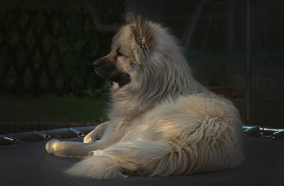 Trampolína se psem