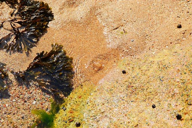 chaluha v moři
